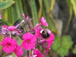 Epoca de flores, tem muita abelha, borboletas e joaninhas, nao aguentei tive que registrar